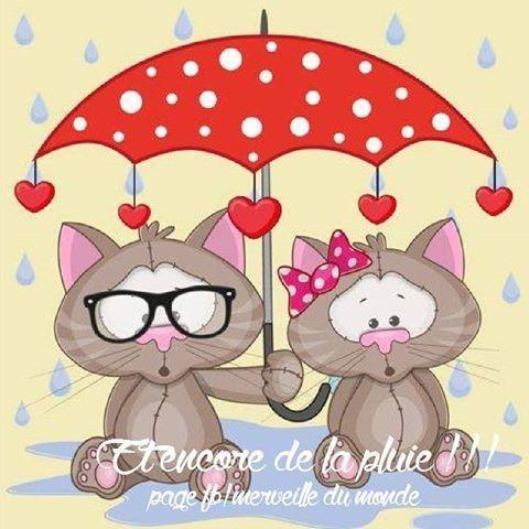 """Résultat de recherche d'images pour """"images chats pluie bonne soirée bisous"""""""
