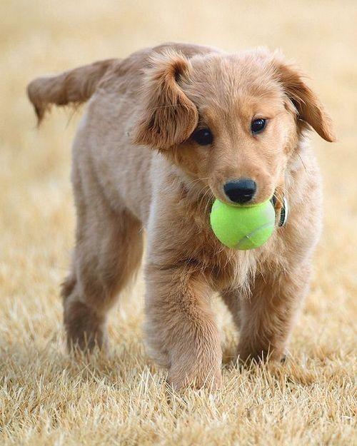 Qui veux jouer avec moi ?