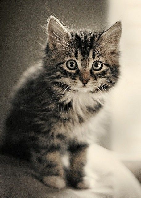 Joli petit chat