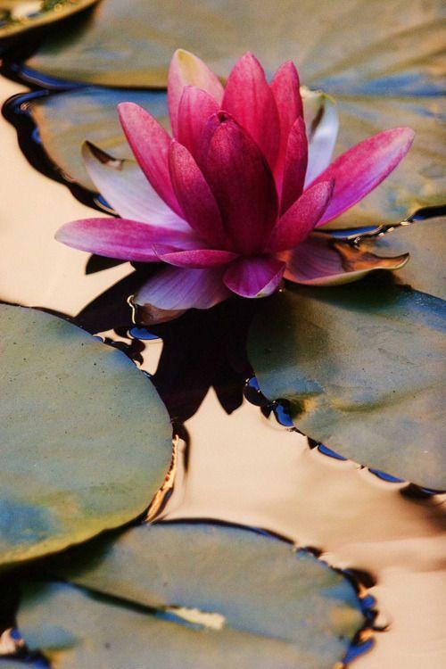 Zen for Mon permis zen