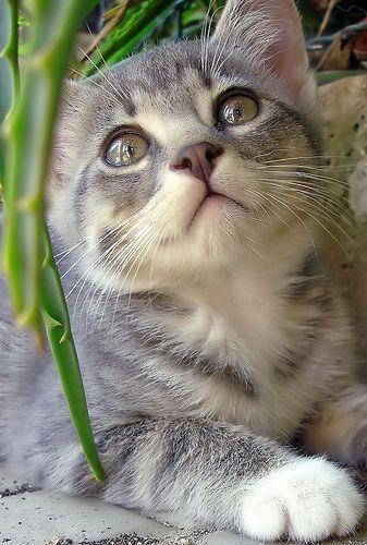 Adorable !!!