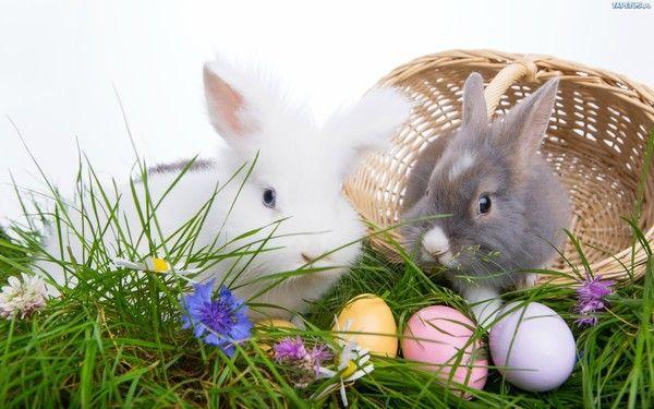 Image du Blog eliotkitty.centerblog.net